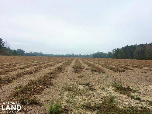 Fairfax Farm : Fairfax : Allendale County : South Carolina