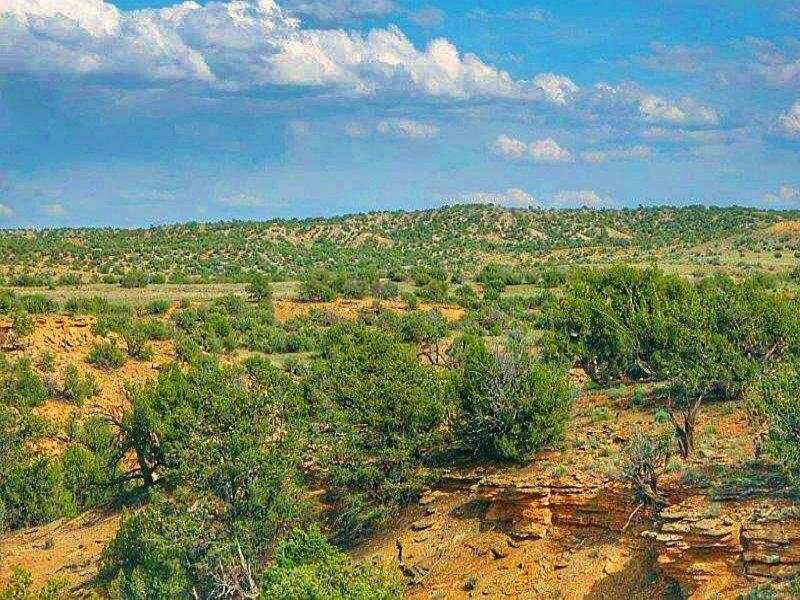 Quiet 37 Acre Wilderness Ranch : Saint Johns : Apache County : Arizona