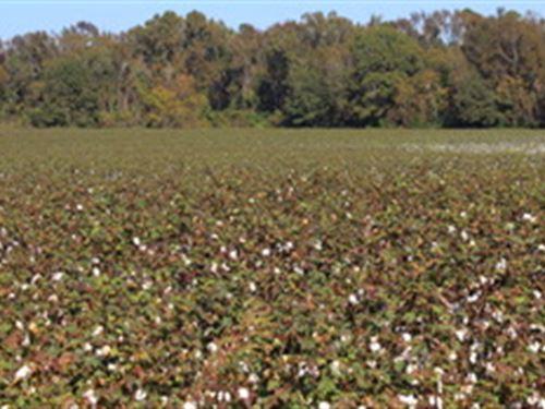 Roberts Farm - Tract D : Portal : Bulloch County : Georgia