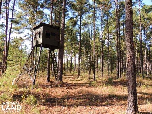 Cypress Bay Hunting And Timber Trac : Blackville : Barnwell County : South Carolina