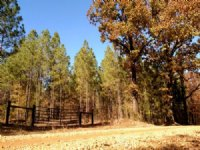 158 Acres Of Timberland : Starkville : Oktibbeha County : Mississippi