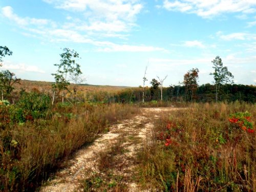18.7 Acres With Beautiful Views : Cabool : Texas County : Missouri