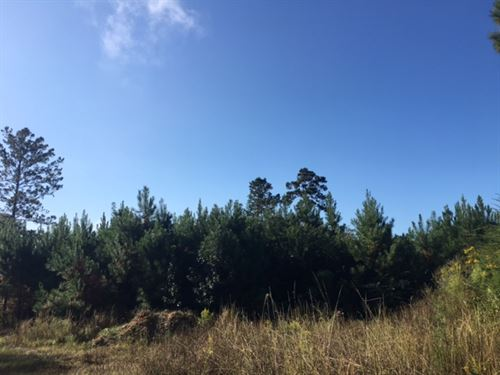160 Acres, Hwy 43 : Poplarville : Pearl River County : Mississippi