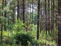 Timber And Recreational Property : Thomaston : Upson County : Georgia