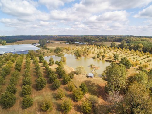 Poultry, Pecan Farm W/wedding Venue : Vinemont : Cullman County : Alabama