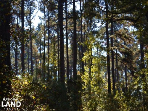 140+/- Acres Pine Plantation Timber : Lacey : Drew County : Arkansas