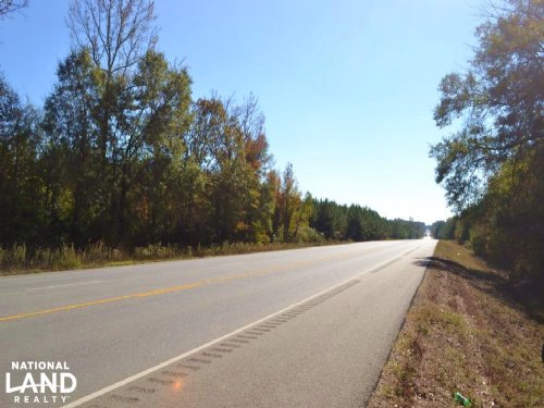 10 Acres Timberland on Highway : Fountain Hill : Ashley County : Arkansas
