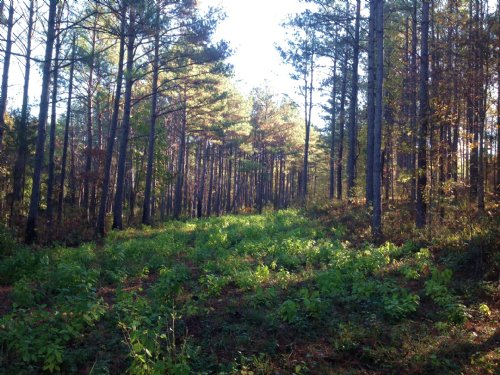 77 Acres Of Timberland : Fayette : Alabama