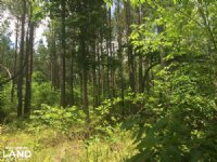 155.7 Acres Timberland & Hunting : Savannah : Hardin County : Tennessee