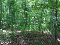 430.5 Acres Timberland & Deer/Tu : Waynesboro : Wayne County : Tennessee