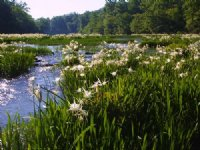 3 Miles On Hatchet Creek : Rockford : Coosa County : Alabama