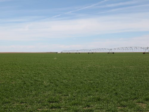 Pivot Irrigated : Imperial : Chase County : Nebraska