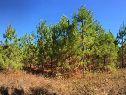 Fleming Branch Timber Farm : Abbeville : Henry County : Alabama