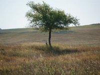 Bowles Crp : Kimball : Kimball County : Nebraska