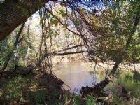 Excellent Duck Hunting & Big Bucks : Tanner : Limestone County : Alabama