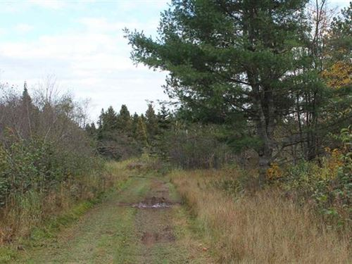Rustic Getaway Woods Rd, 1098865 : Lanse : Baraga County : Michigan