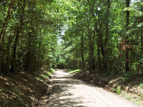 42 Ac Wilderness Rd : Point Blank : San Jacinto County : Texas