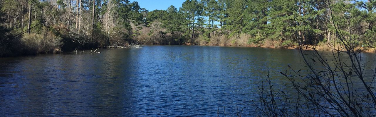 166 Ac Great Timberland Tract Near : Jasper : Texas