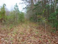 14 Acre Lot : Goochland : Goochland County : Virginia