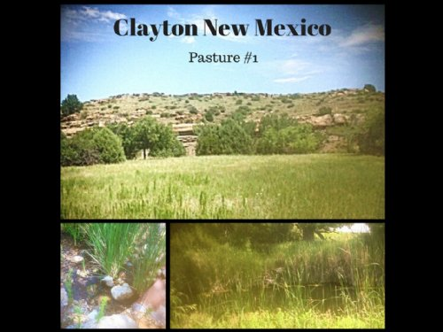 Jordan Ranch : Clayton : Union County : New Mexico