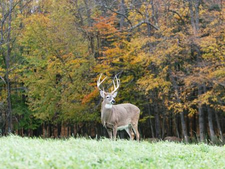 655 Ac Whitetail Ranch : West Wilfield : Herkimer County : New York