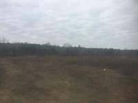 Land For Sale - Pheba, Ms : Pheba : Oktibbeha County : Mississippi