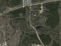55 Acre Timber Investment Property : Baxley : Appling County : Georgia