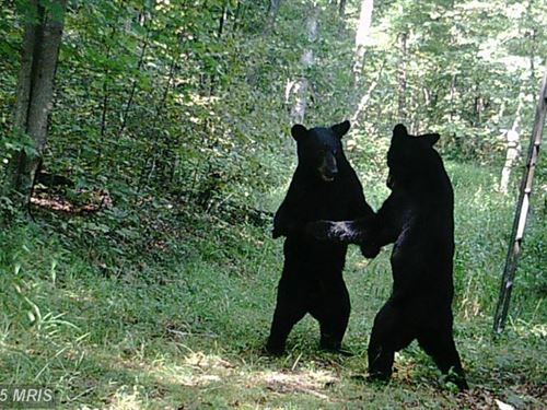 You Are In Bear Country : Romney : Hampshire County : West Virginia