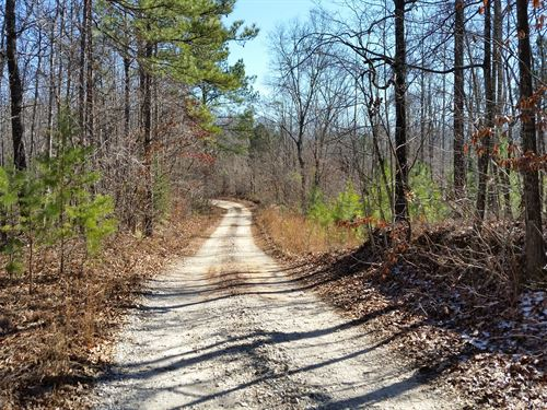 210+/- Acres Timberland In Marble V : Sylacauga : Talladega County : Alabama