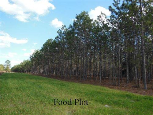 Reduced - 240 Acres : Bell : Gilchrist County : Florida