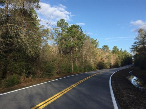 Collinsworth Rd Tract : Westville : Walton County : Florida