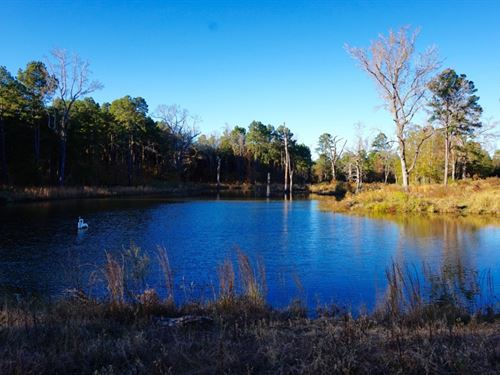 Recreational Hunting Timber Land Ca : Shreveport : Caddo Parish : Louisiana