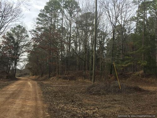 405 Ac Hunting/Timber Investment : Durant : Holmes County : Mississippi