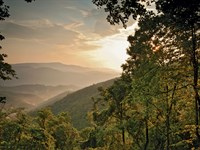 Wooded Mountain Estate Over 30+ Ac. : Blowing Rock : Wilkes County : North Carolina
