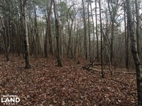 Black Creek Hunting/Farm Tract : Bessemer : Jefferson County : Alabama