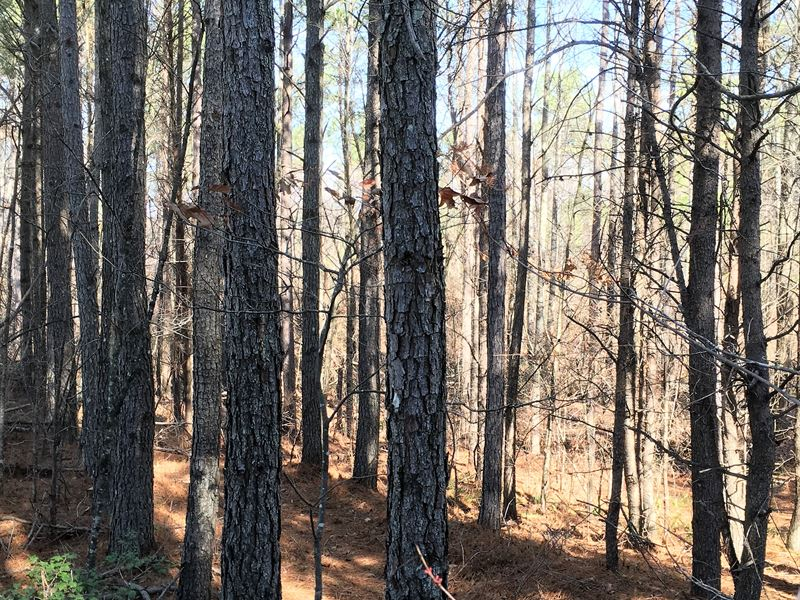 Loblolly Lane - 18.95 Acres : Fairmount : Pickens County : Georgia