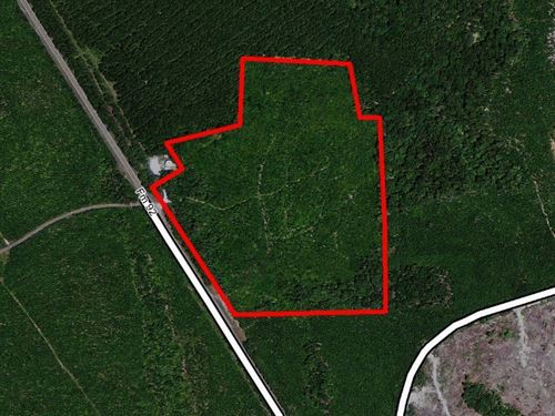 37 Ac Wooded Home Site With Highwa : Spurger : Tyler County : Texas