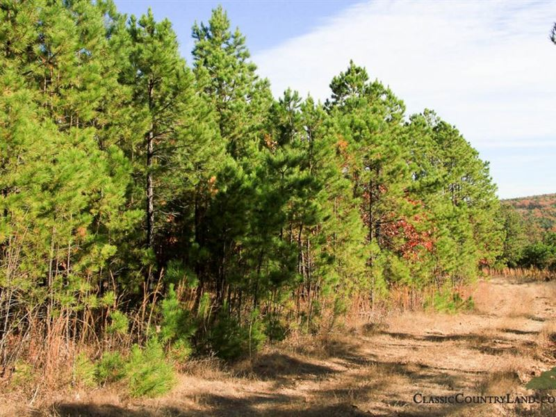 Stone Creek, Latimer County 3 : Wiburton : Latimer County : Oklahoma