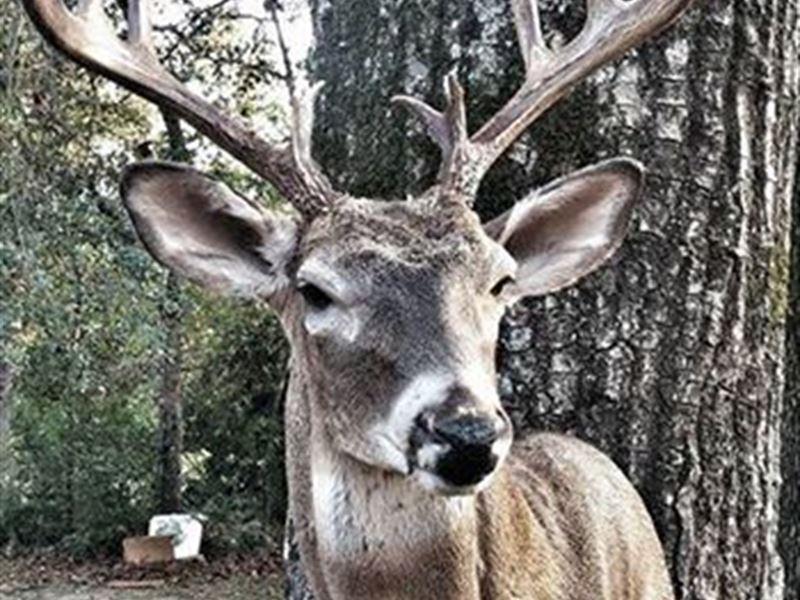 Farm/Hunting Land With Home : Crockett : Houston County : Texas