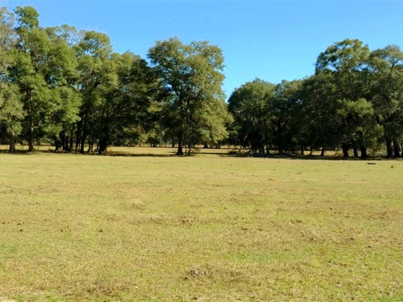 15 Acres In Gorgeous Nw Marion Co. : Reddick : Marion County : Florida