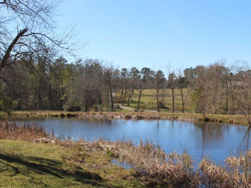 Bethel Springs 10 : Montgomery : Montgomery County : Texas