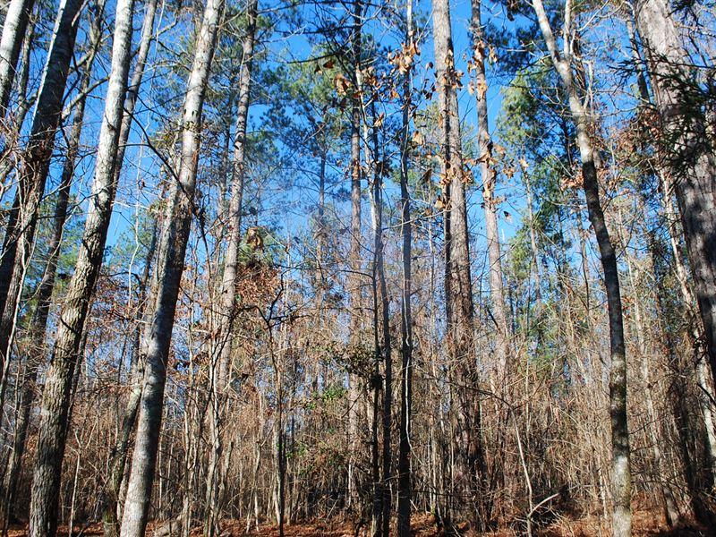 78 Acre Recreational Tract : Jonesville : Union County : South Carolina