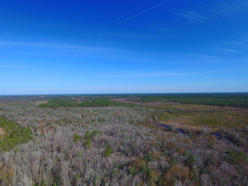 366 Acre Hunter's Paradise : Argyle : Clinch County : Georgia