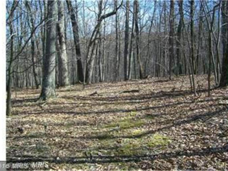 50 Plus Acres In Wv : Paw Paw : Hampshire County : West Virginia