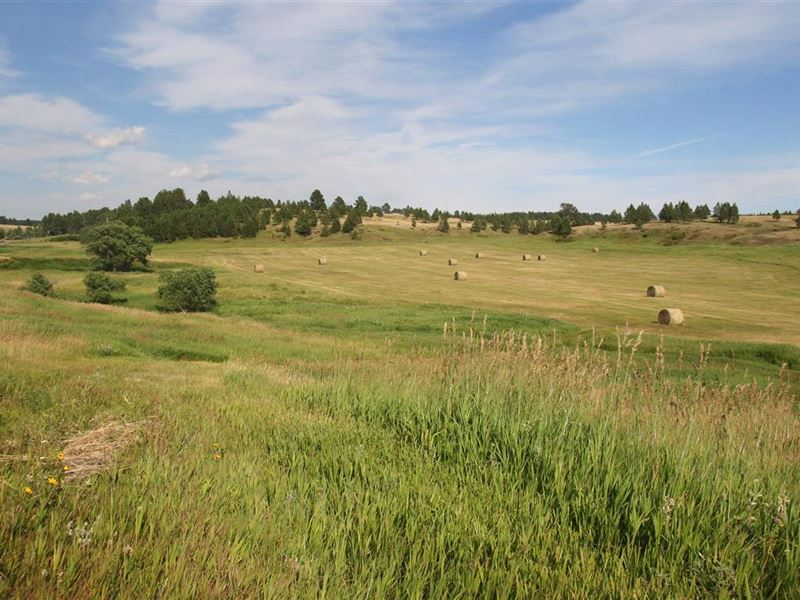 Bar T Bar Property : Four Corners : Weston County : Wyoming
