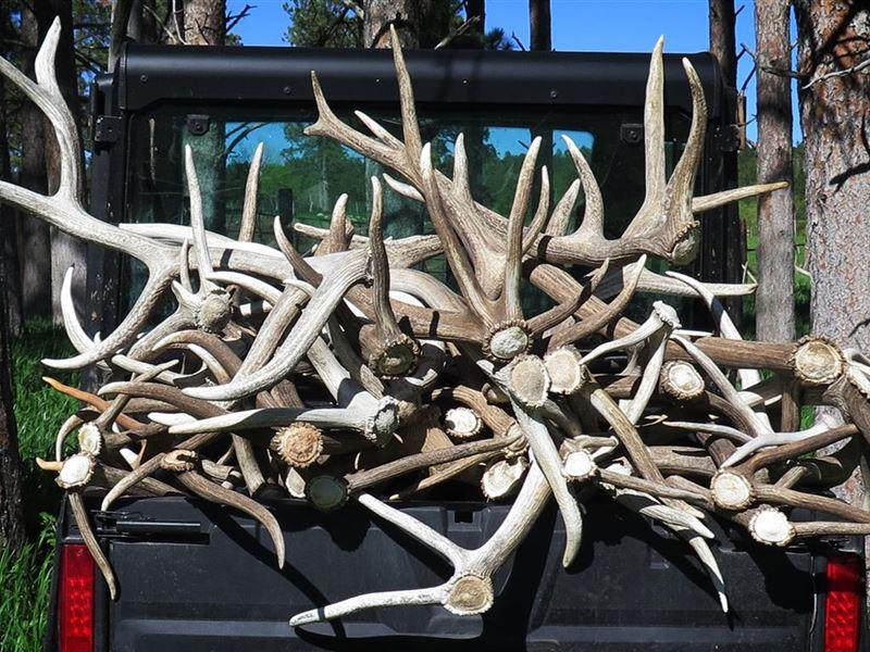 Rocky Elk Ranch : Newcastle : Weston County : Wyoming