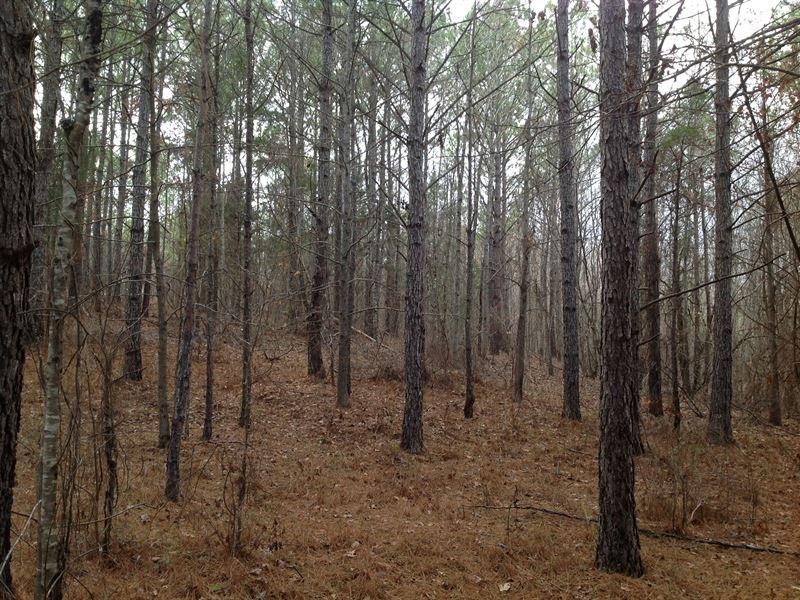 48 Acres In Bibb County : Brent : Bibb County : Alabama