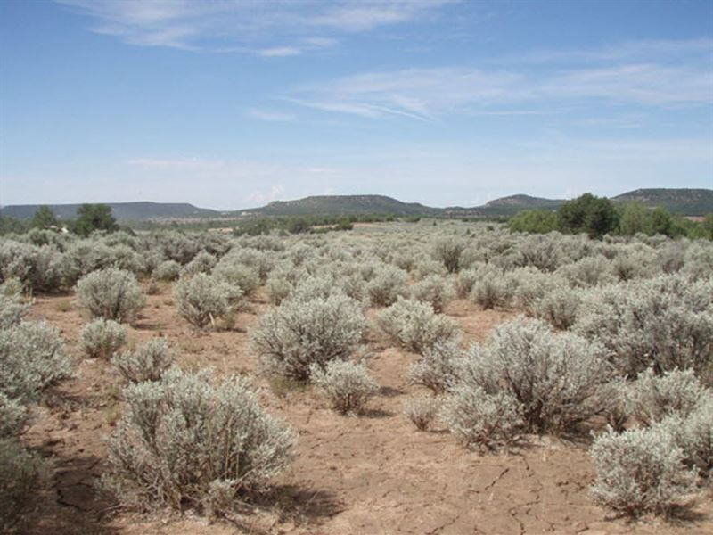 40 Acres Near The Apishapa River : Thatcher : Las Animas County : Colorado