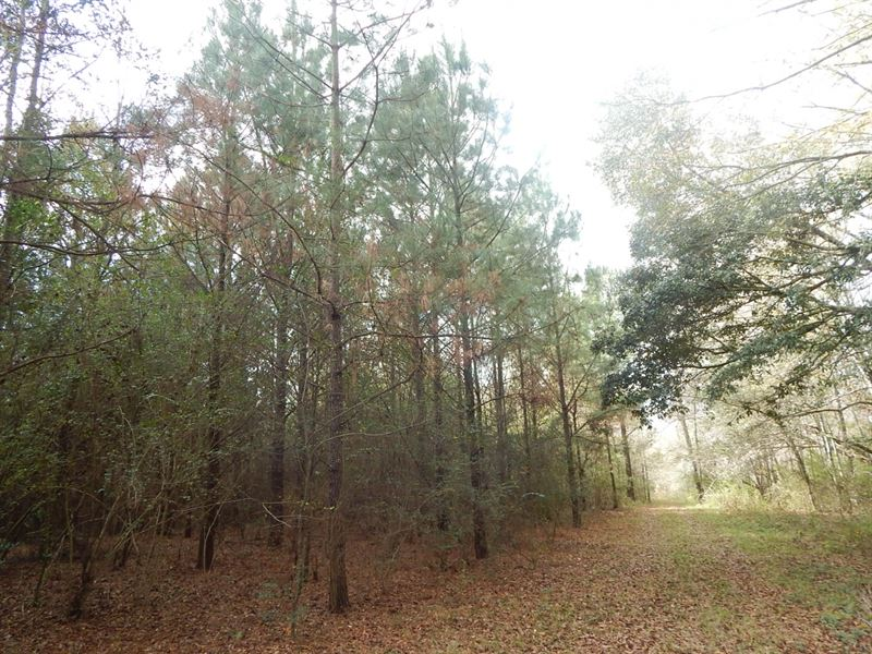 32 Acres On Magee Hill Rd : Tylertown : Walthall County : Mississippi