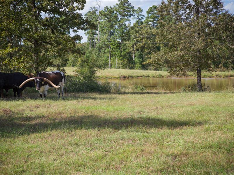 67 Acres Flynt Road : Huntsville : Walker County : Texas